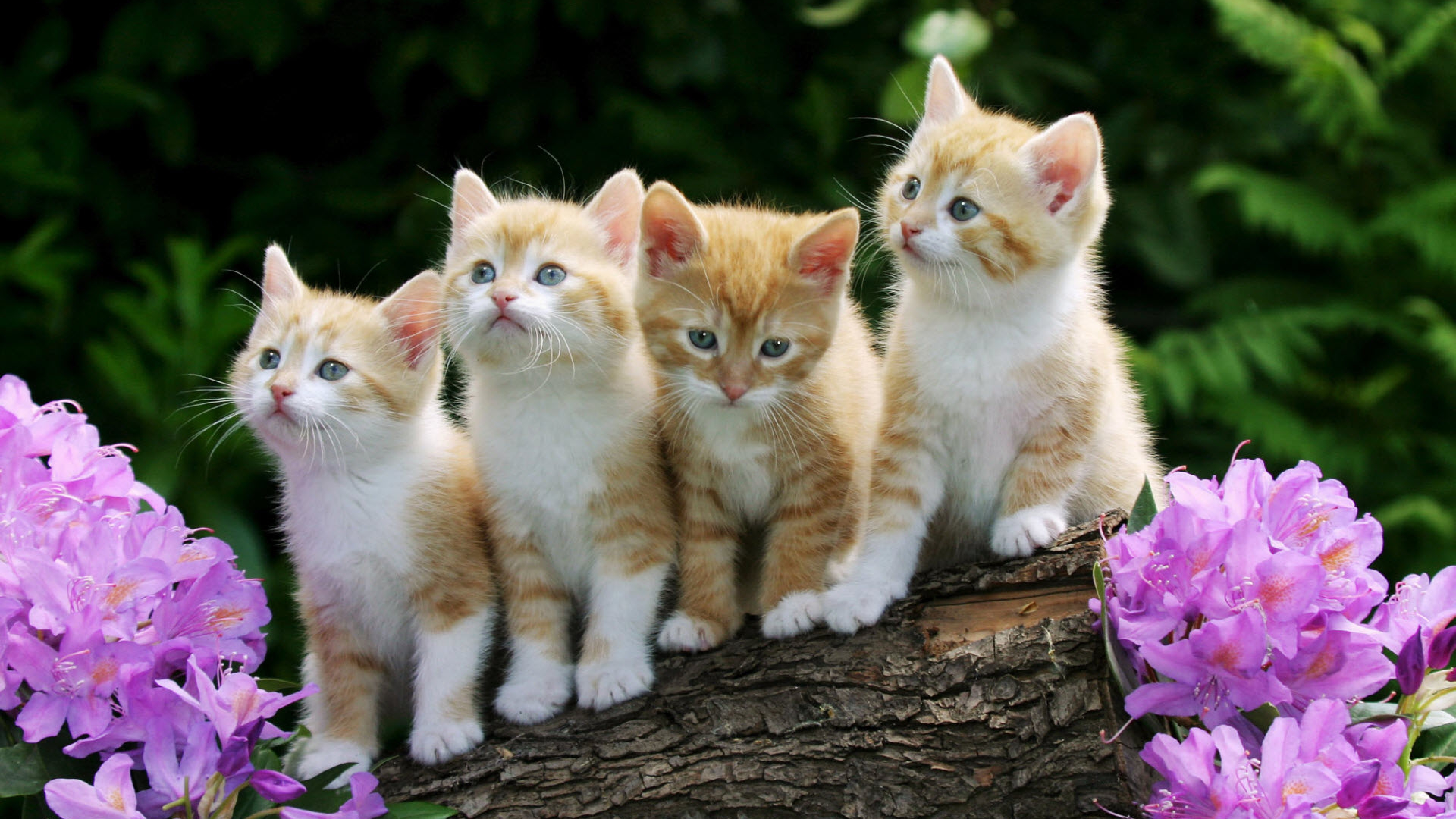 Cute Kittens Photo Wallpaper HD-3840x2160