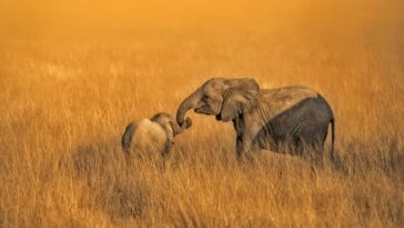 Cute Mother Elephant and Baby Elephant Wallpaper HD