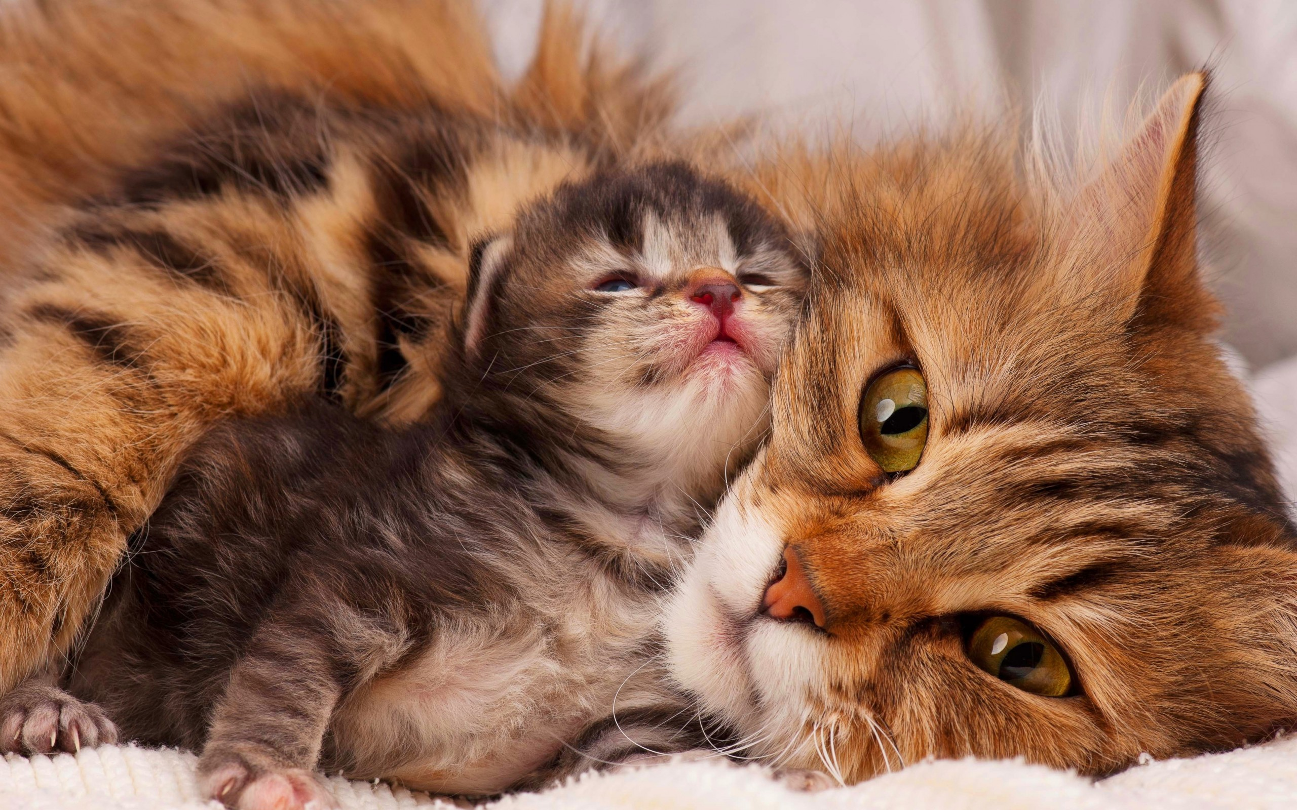 Mother Cat and her Kitten wallpaper 2560x1600