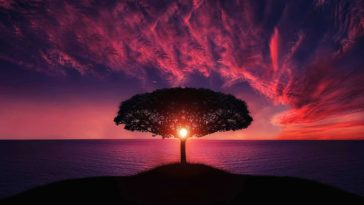Sunset through the seaside lonely tree HQ background wallpaper
