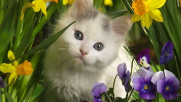 Cute Innocent Cat in Spring
