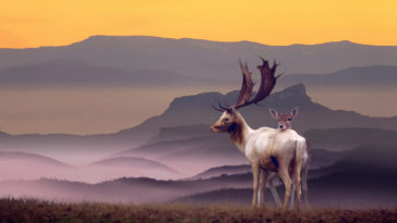 Beautiful Deer Mother and Baby in Amazing Landscape Photography 1920x1200