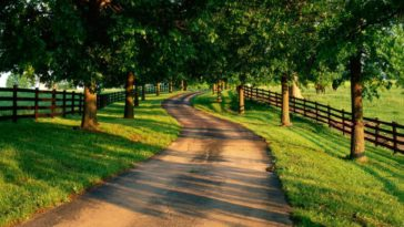 Country Road Tree Nature Picture Wallpaper 1920x1080