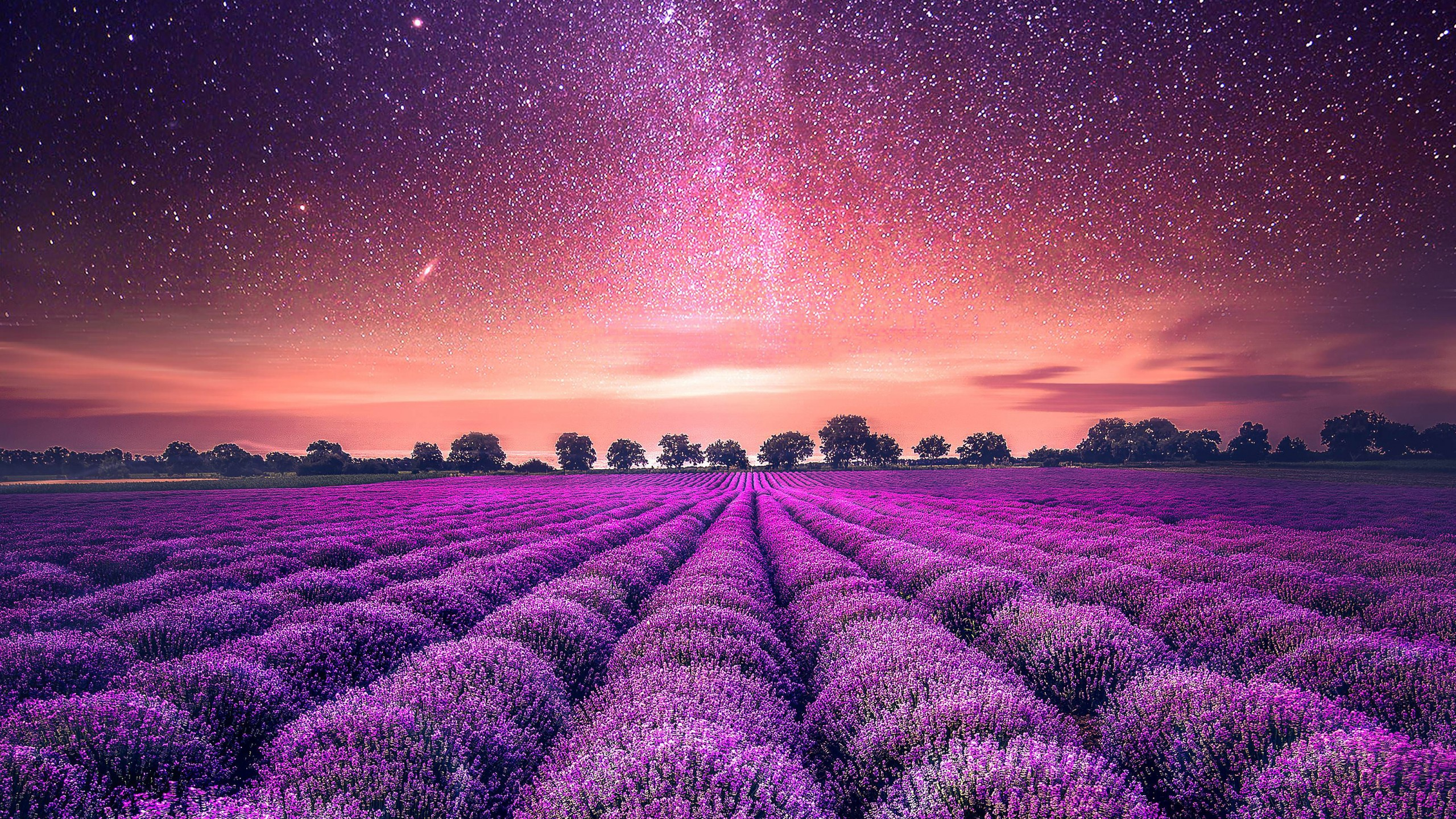 Stunning Starry Sky Lavender Field Background
