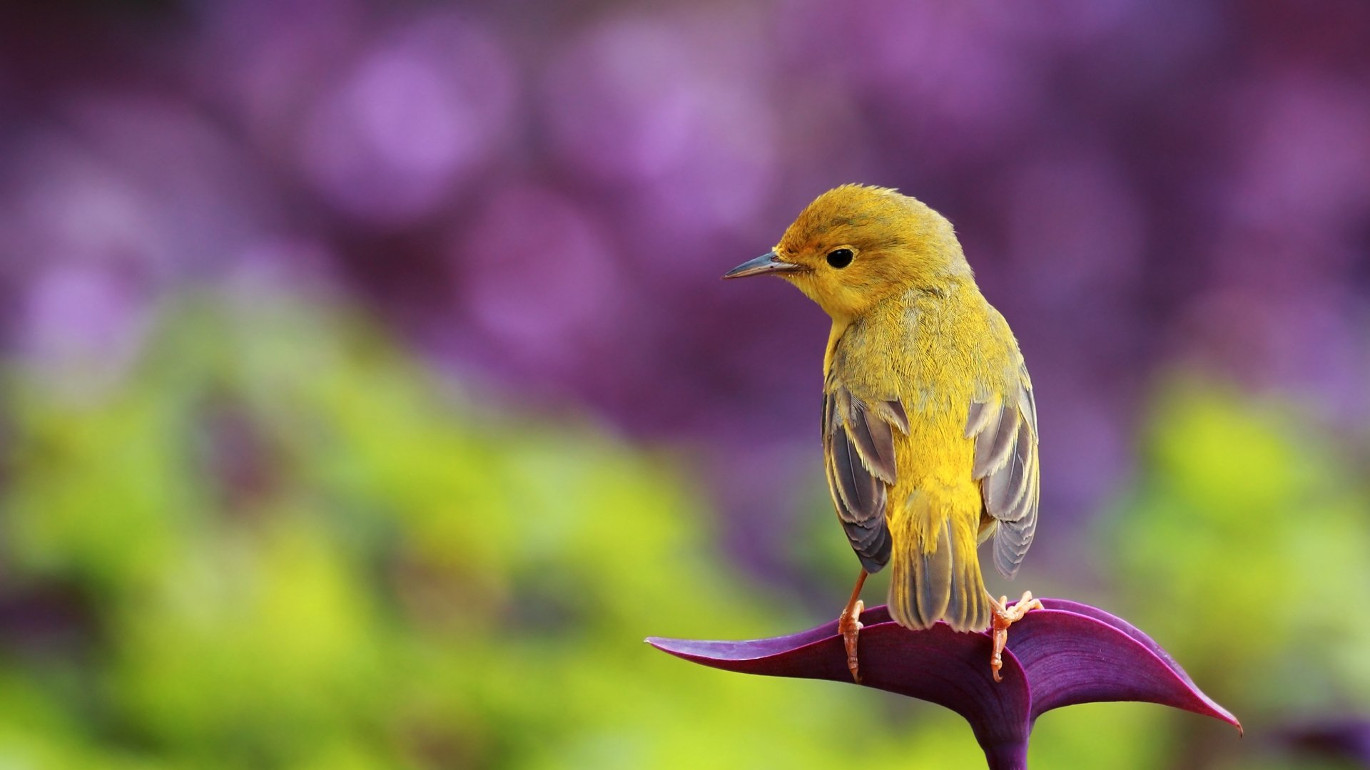 22 Amazing Bird Photographs Wallpapers HD
