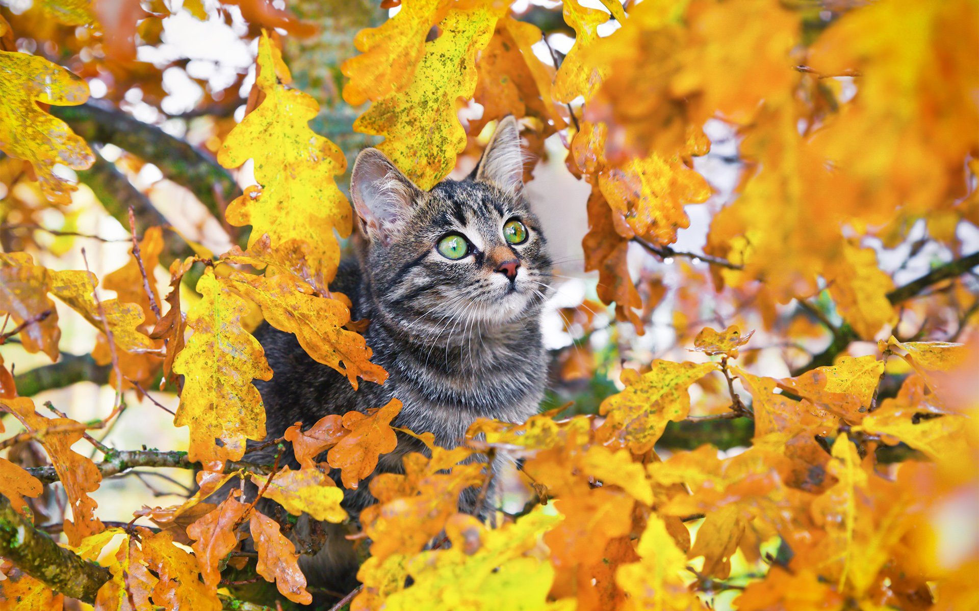 Cat Enjoying Autumn Season Photos Wallpapers
