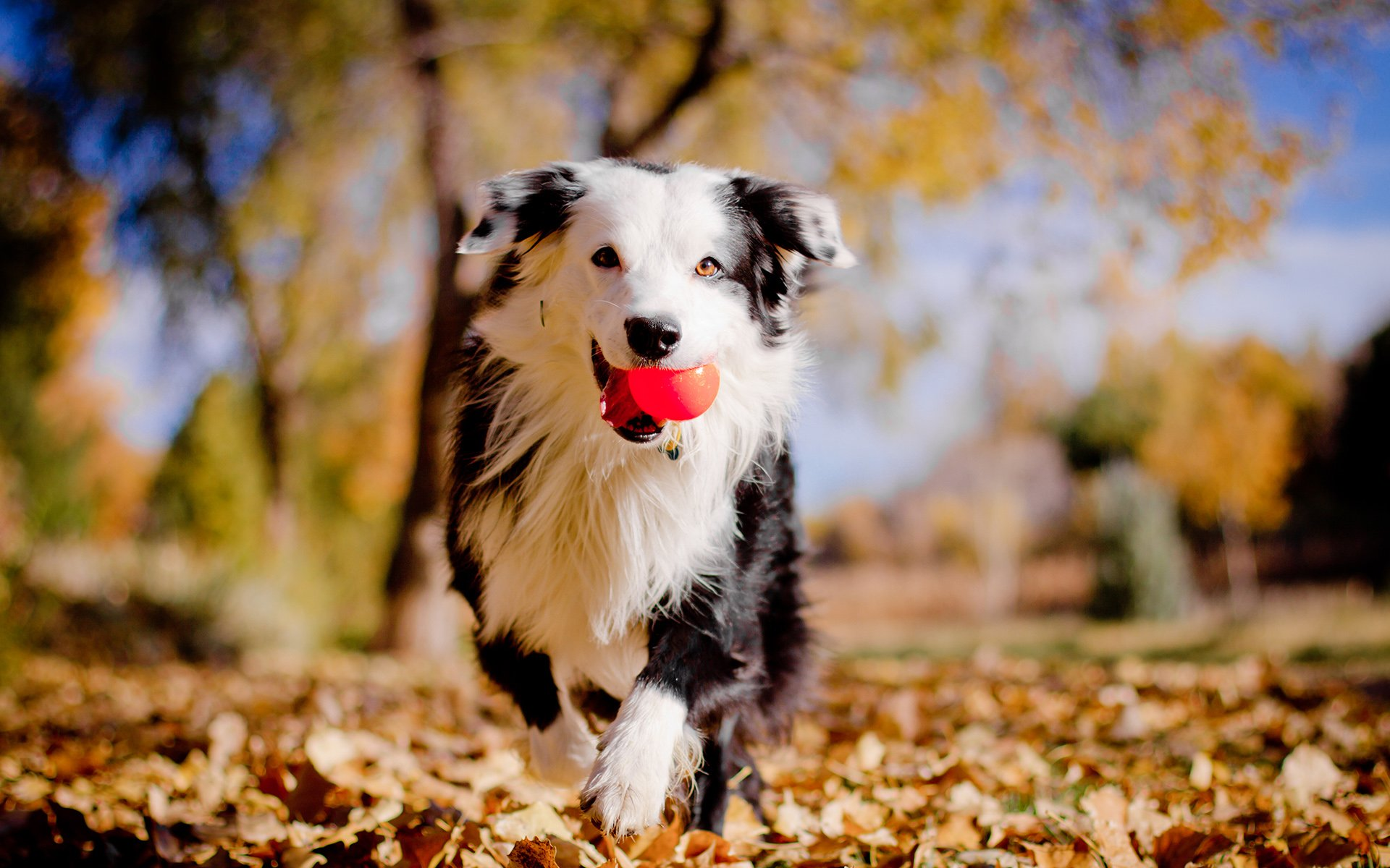 Dog Enjoying Autumn Season Photos Wallpapers