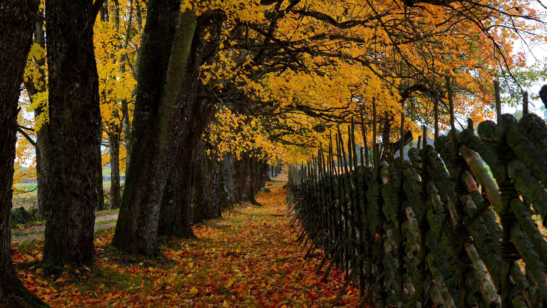 Autumn in Sweden Photography Wallpaper 30