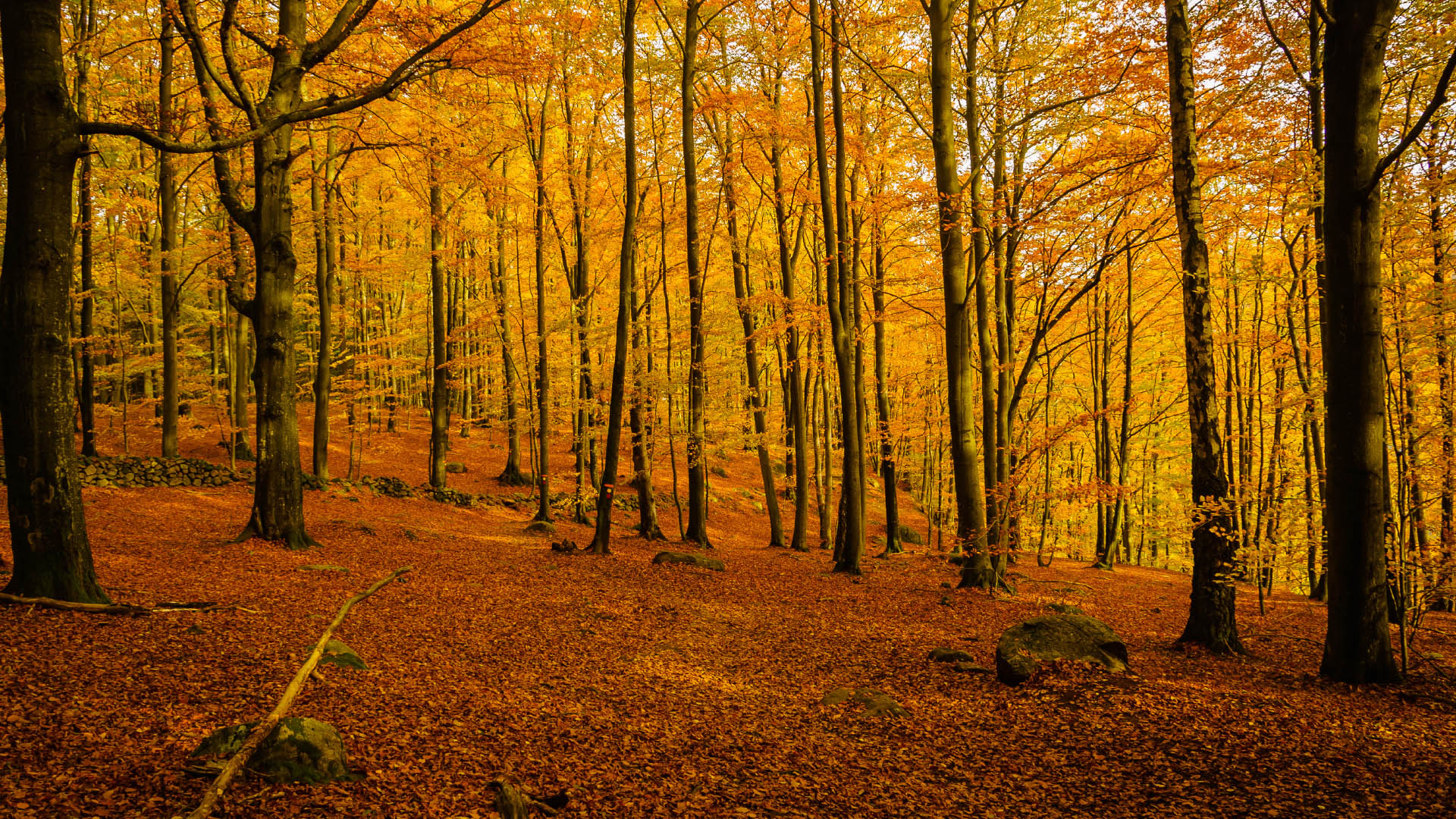 Autumn Forest in Sweden Photography Wallpaper 31