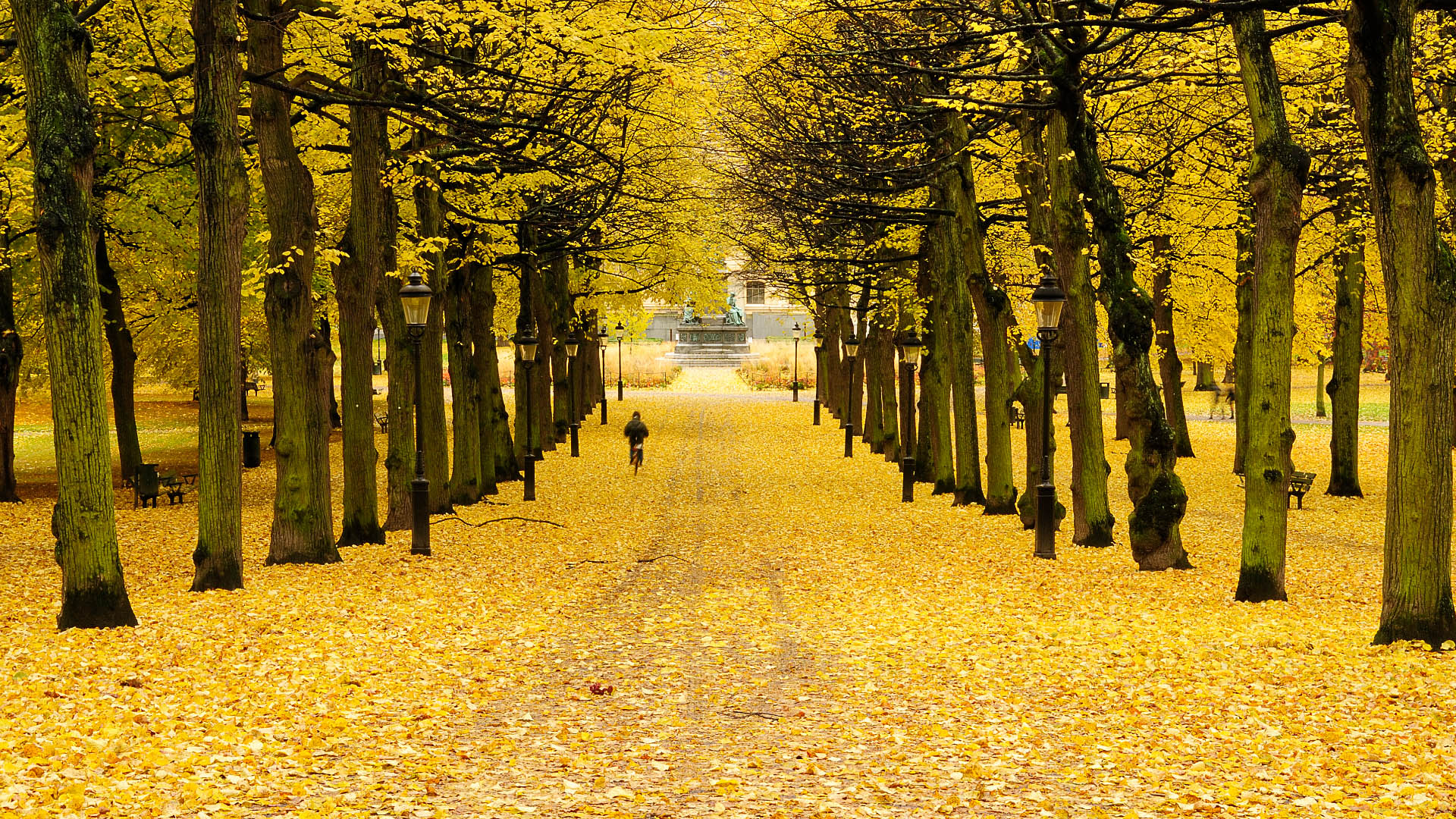 Autumn in Sweden Photography Wallpaper