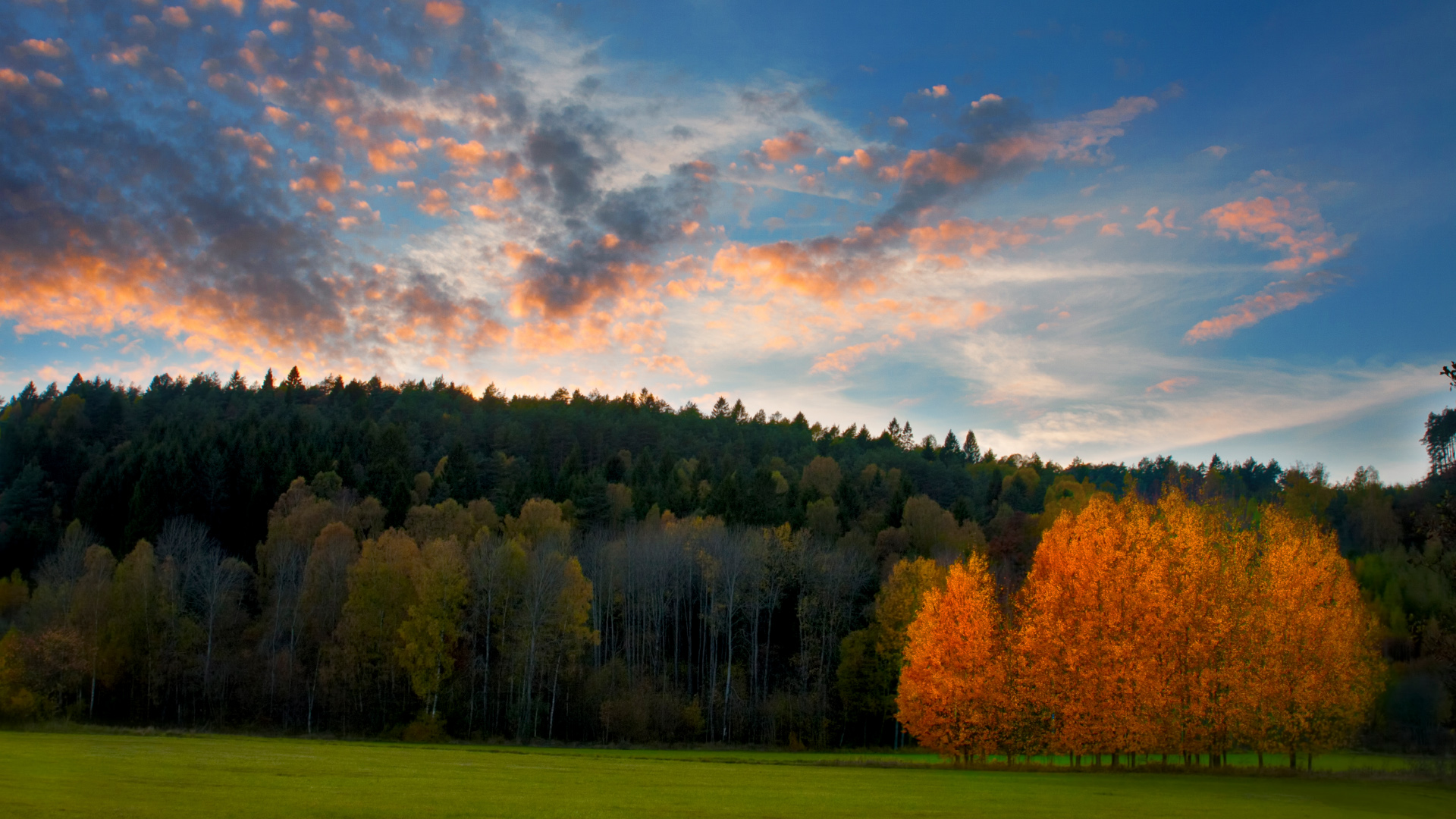 Autumn Jungle in Sweden Photography Wallpaper 8