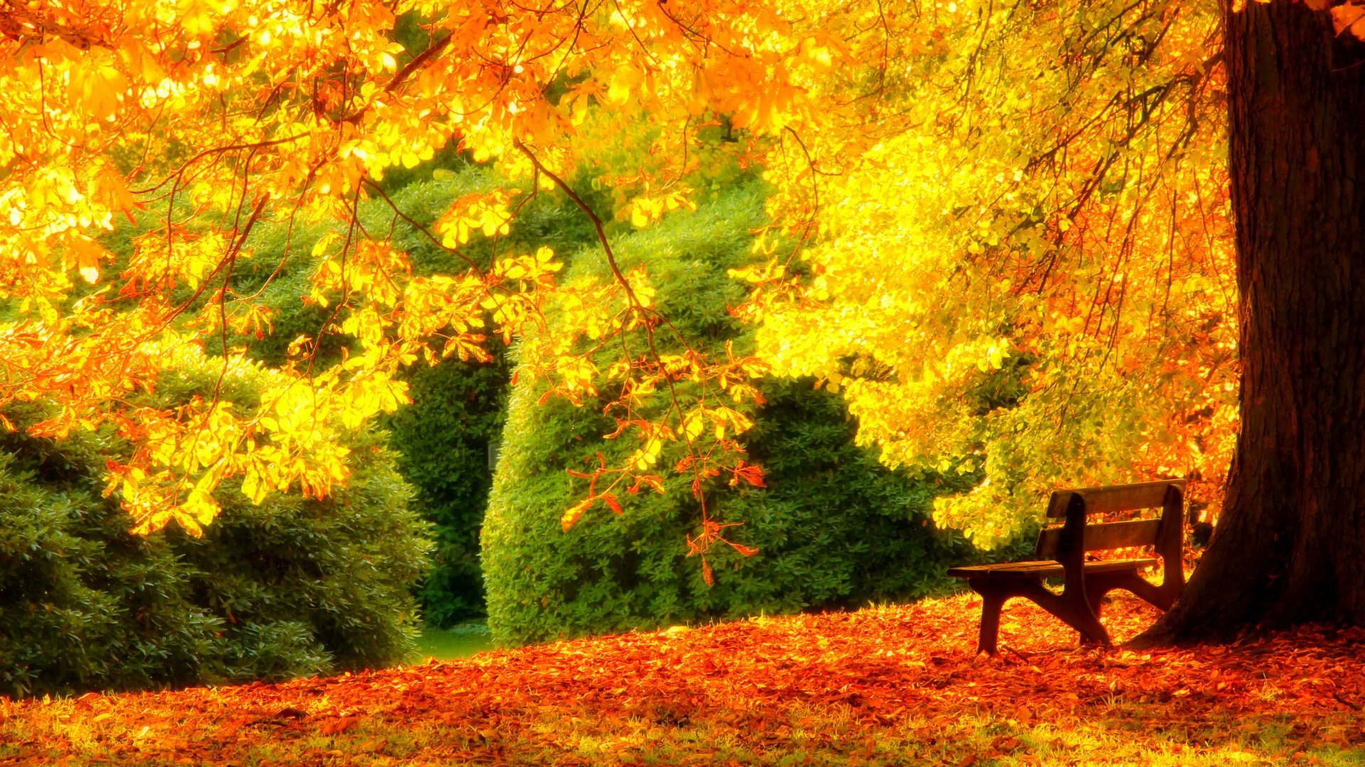Lovely Fall Scenery Backgrounds Free Download