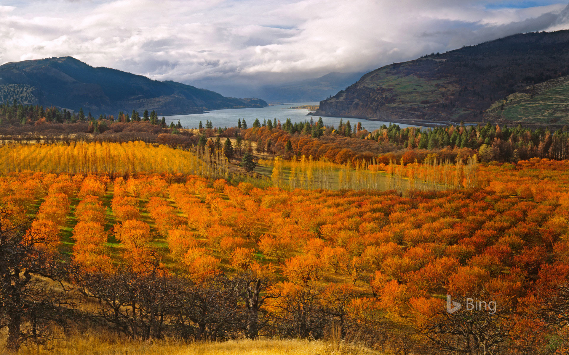 Cherry orchards overlooking the Columbia River Gorge National Scenic Area
