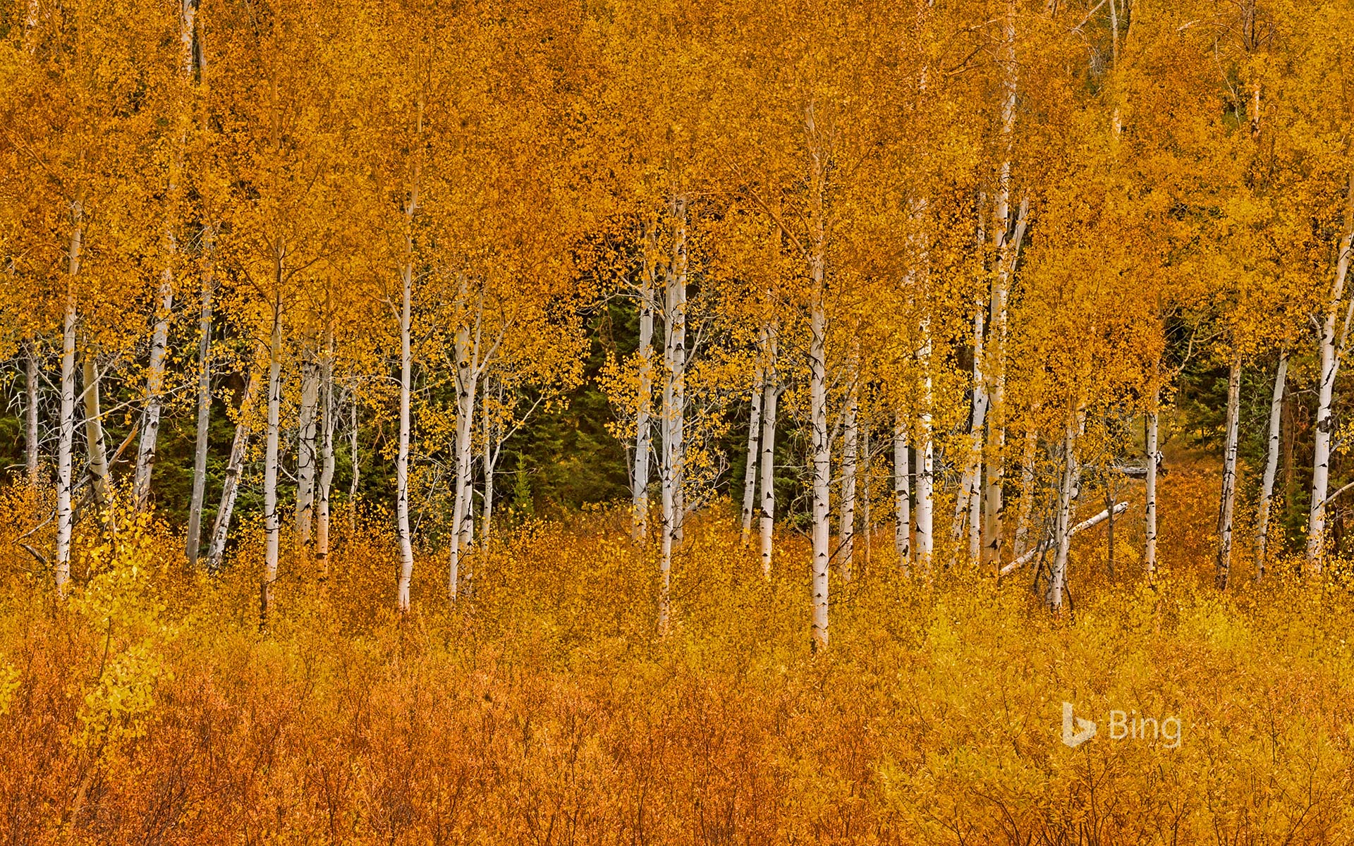 Bing Autumn Images Wallpapers 10