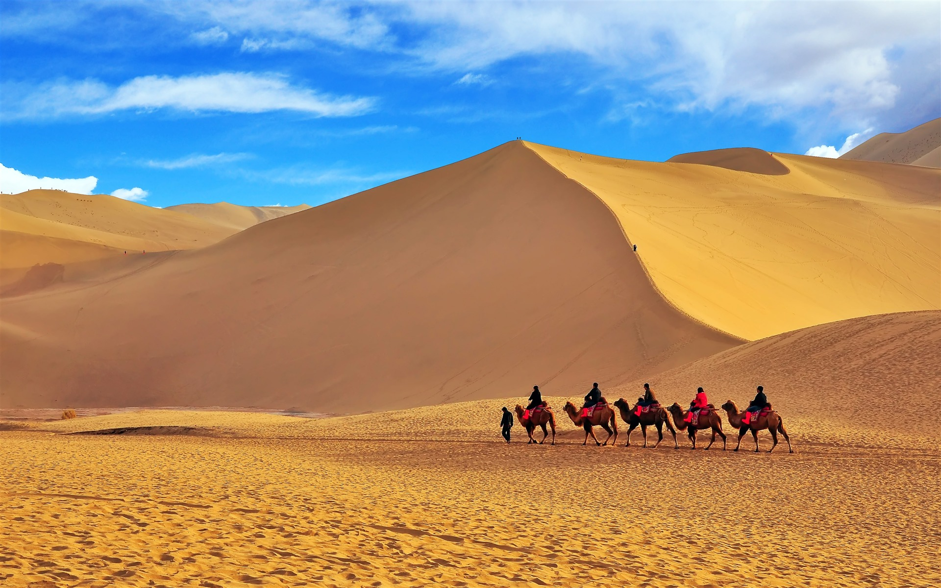 China Desert Camel Team wallpaper 1920x1200