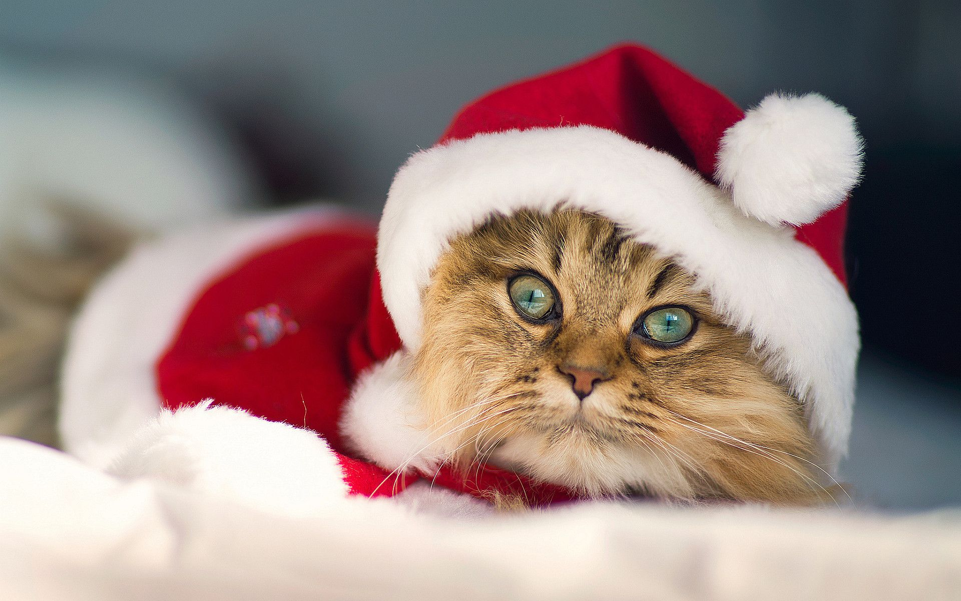 30 Christmas Cat Photo Wallpapers