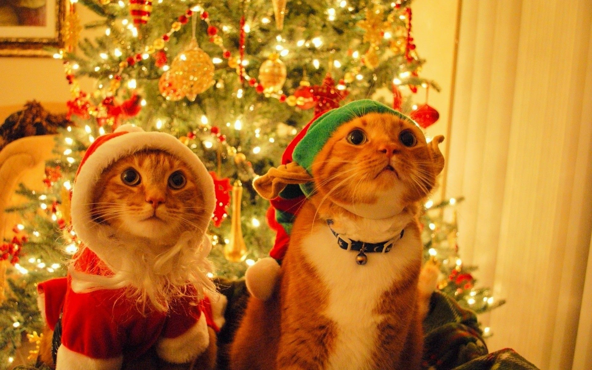 30 Christmas Cats Photo Wallpapers