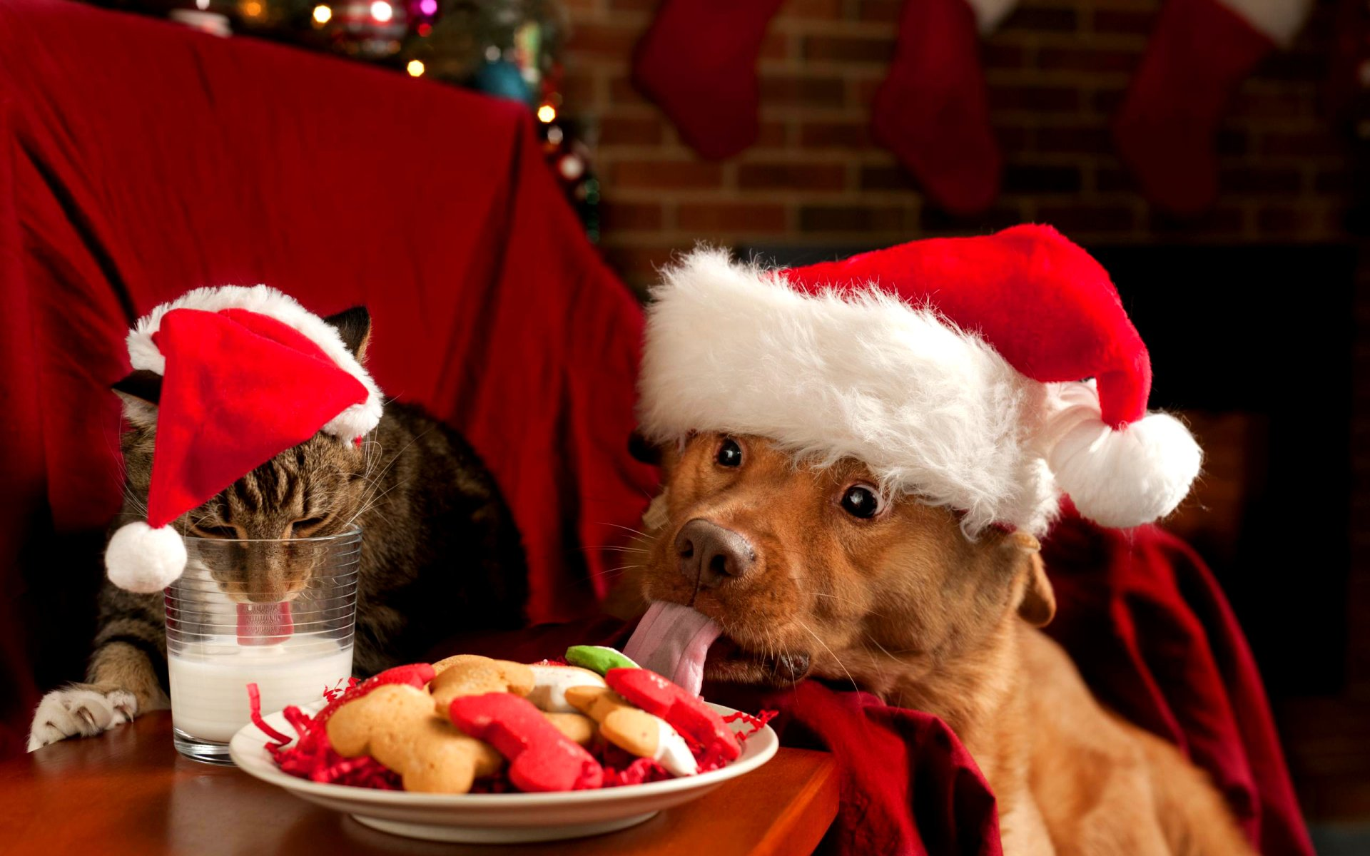 30 Cute Christmas Cats Photo Wallpapers Hd