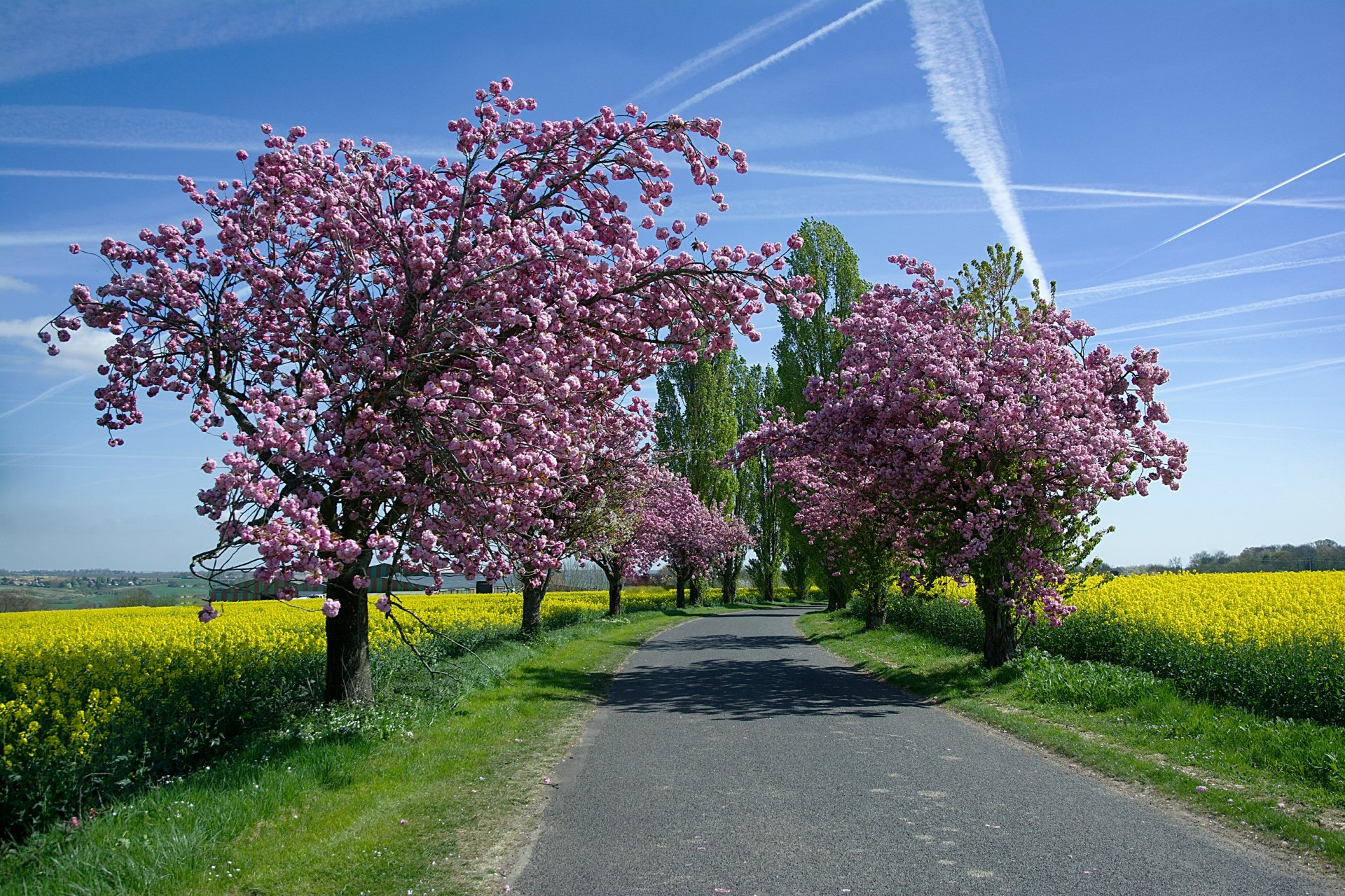 Country Road in Spring Wallpaper 30