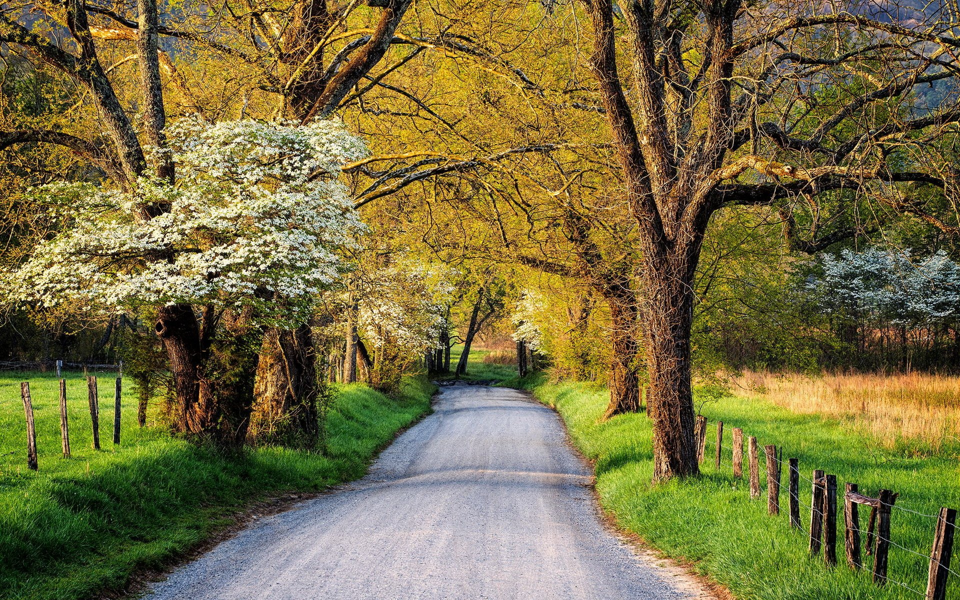 Country Road in Springtime Wallpaper
