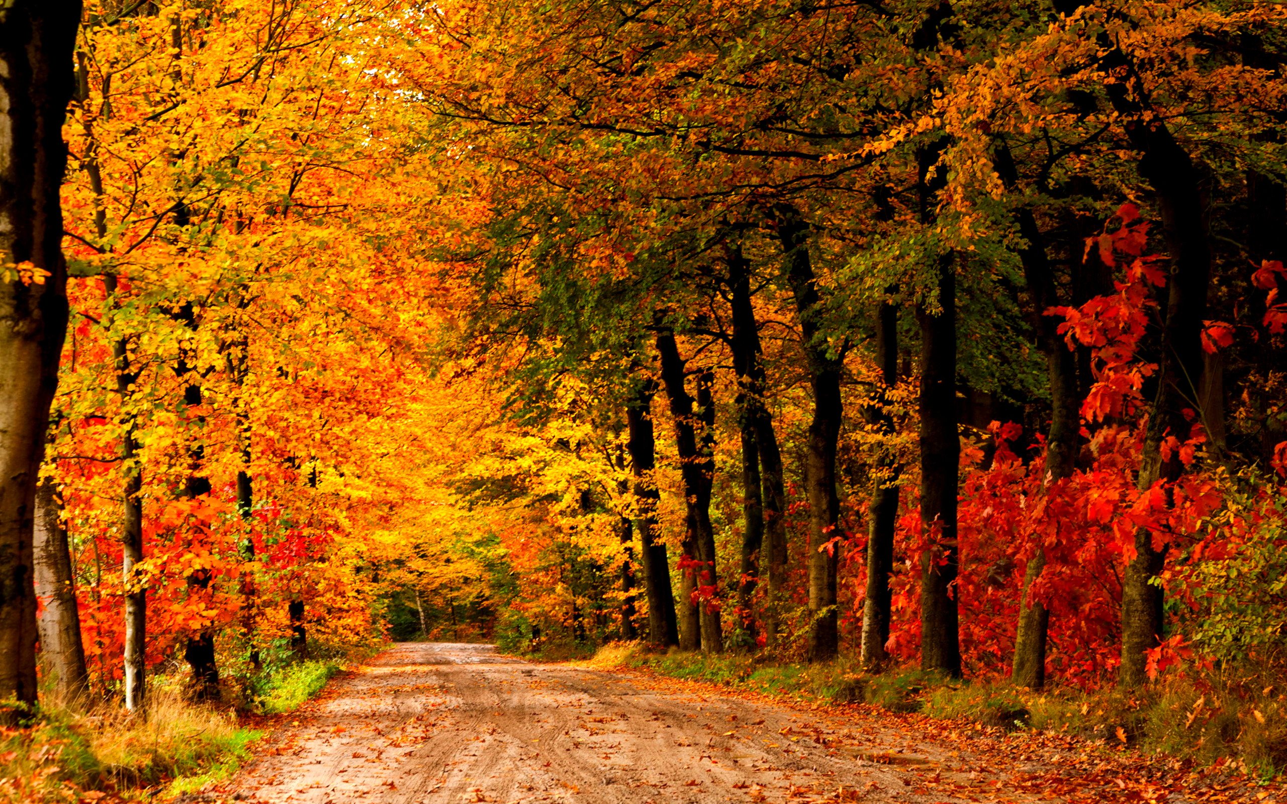 Autumn Season Countryside Road Wallpapers