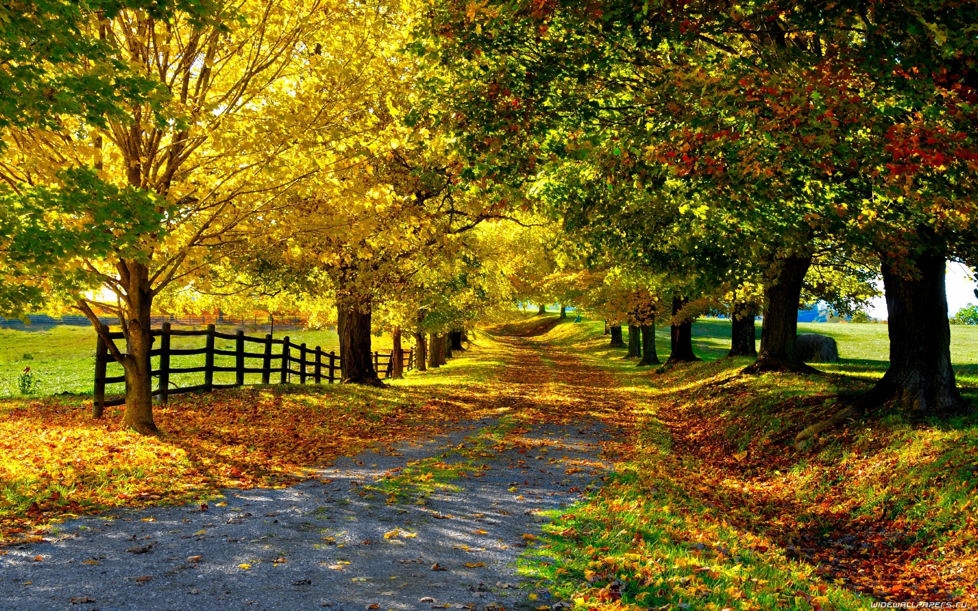 Fall in Countryside Road Wallpapers