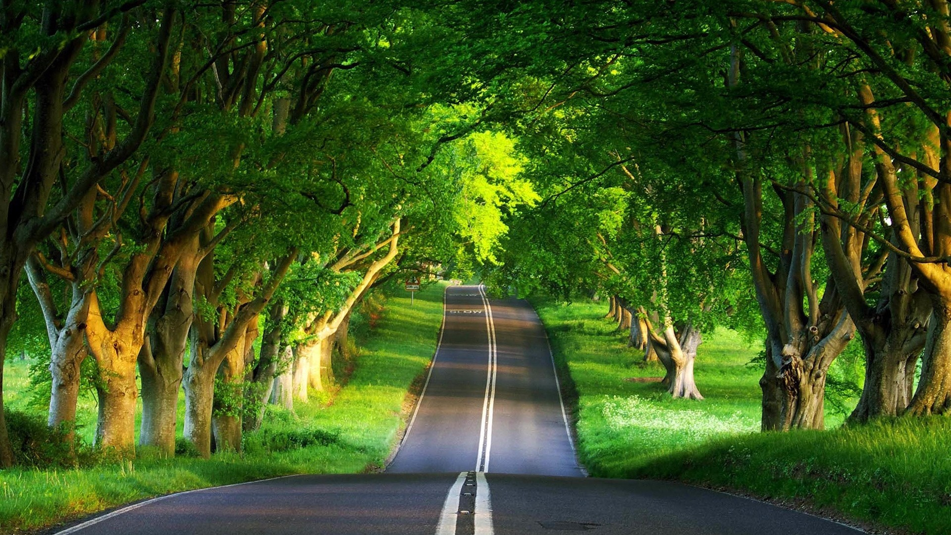 Green Trees on Countryside Road Wallpaper