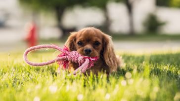 30 Cute Puppy Photos HD Wallpapers