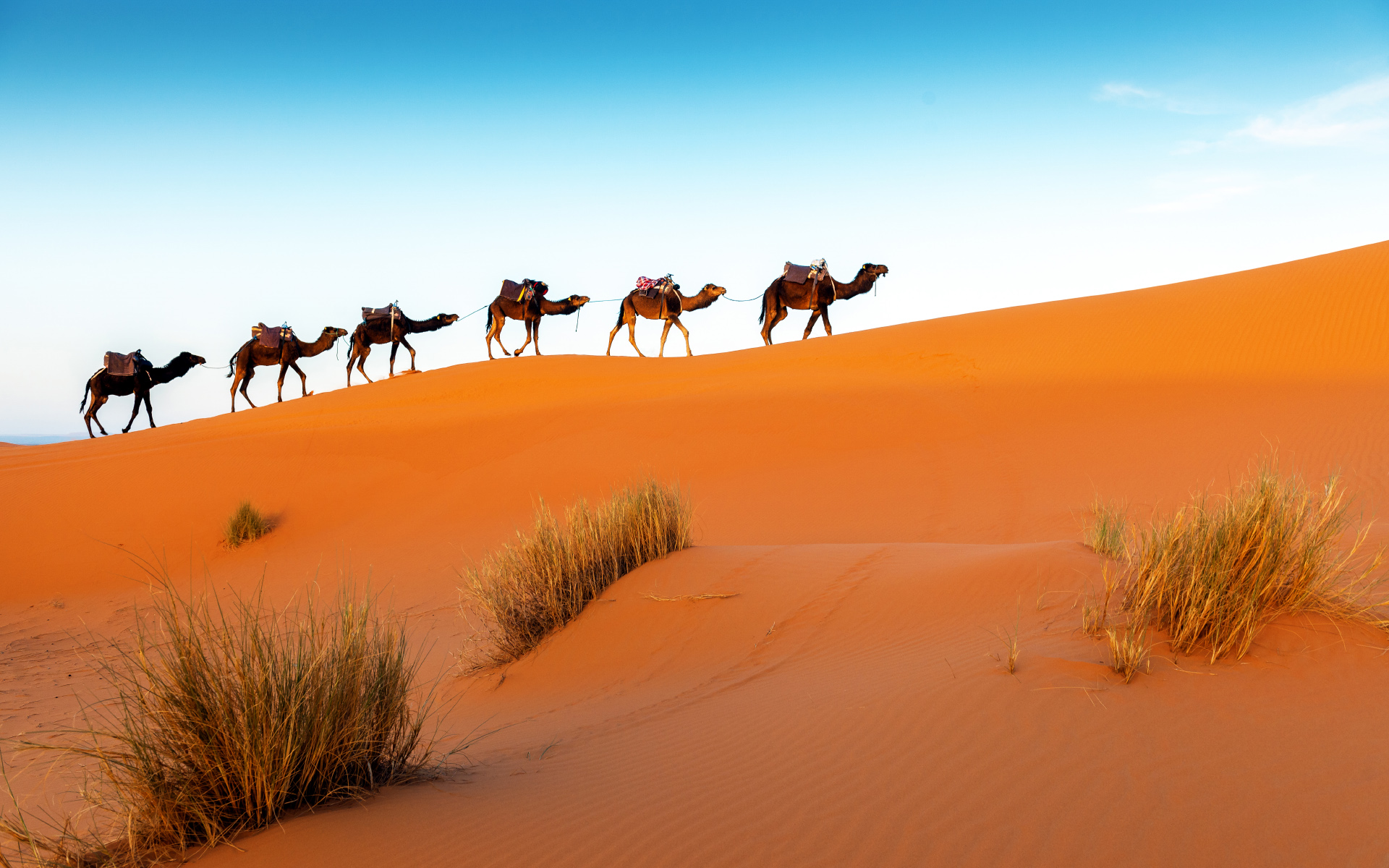 Desert Photo Wallpaper Travellers with Camels 22