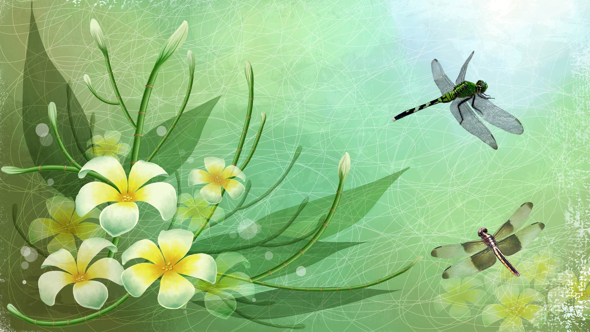 Dragonfly Art Background Wallpaper