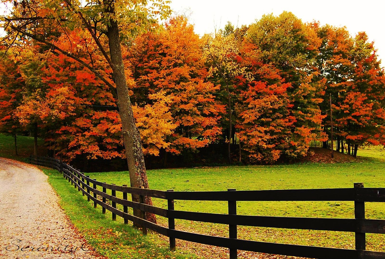 Fall Colors Trees Path Nature Fence Autumn High Quality Picture