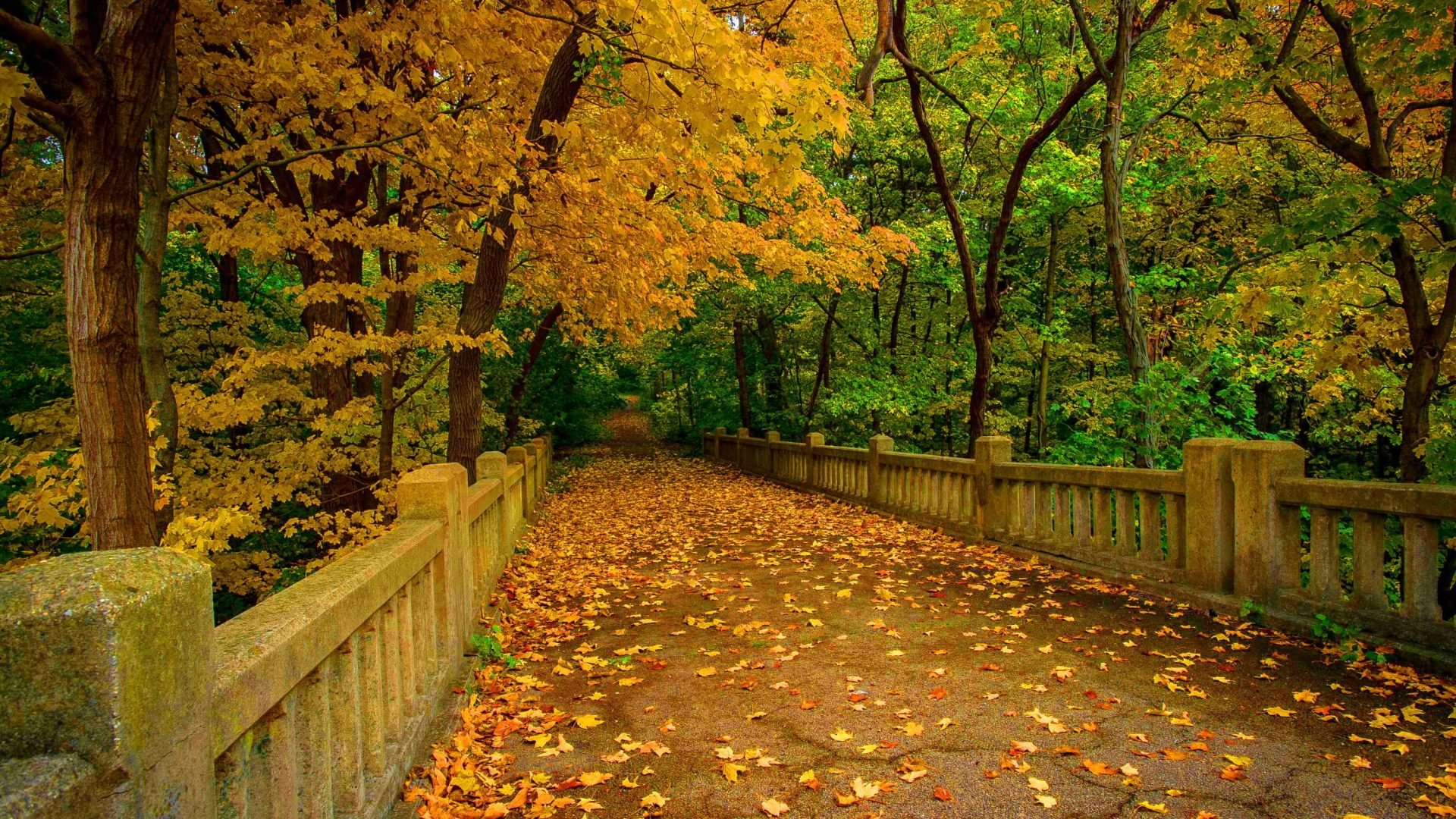Park Fall Forest Bridge Trees Autumn Leaves Wallpaper Collection