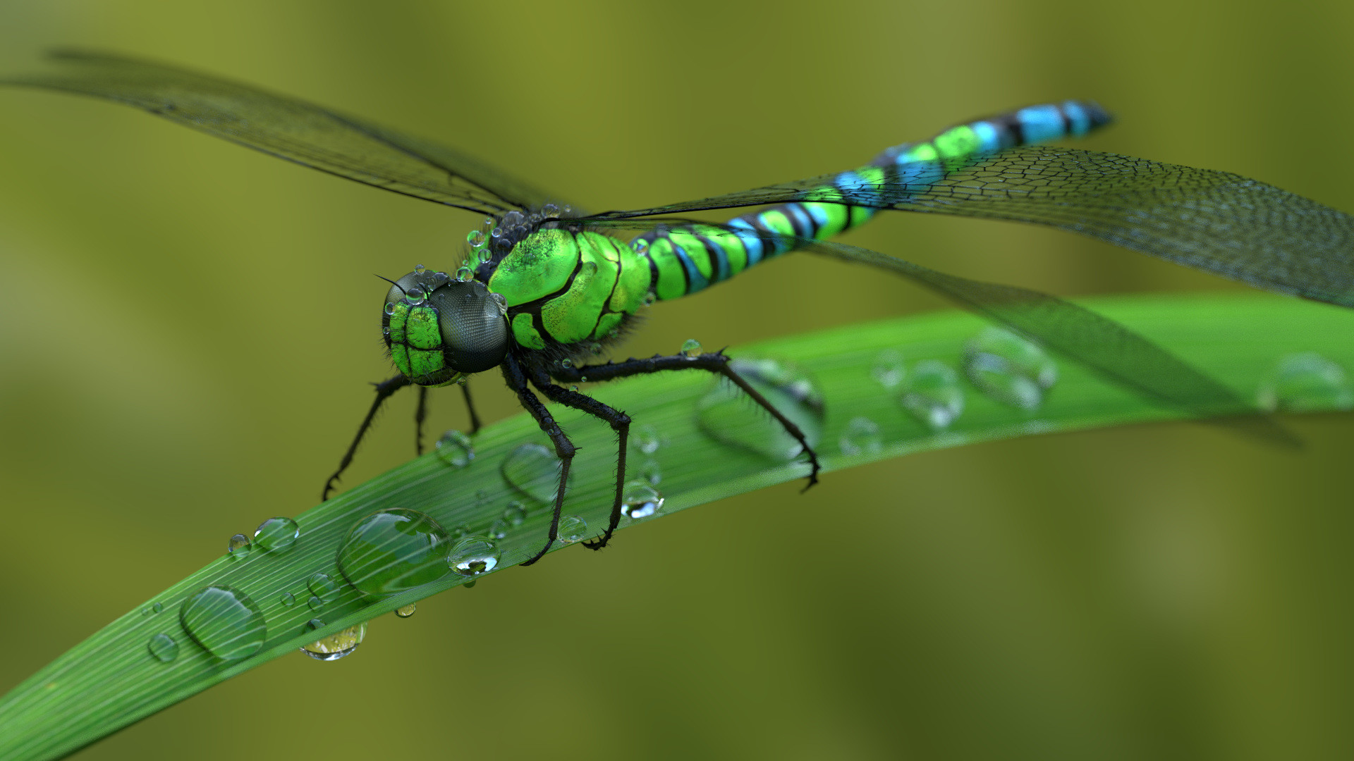 Green Blue Dragonfly Wallpaper HD