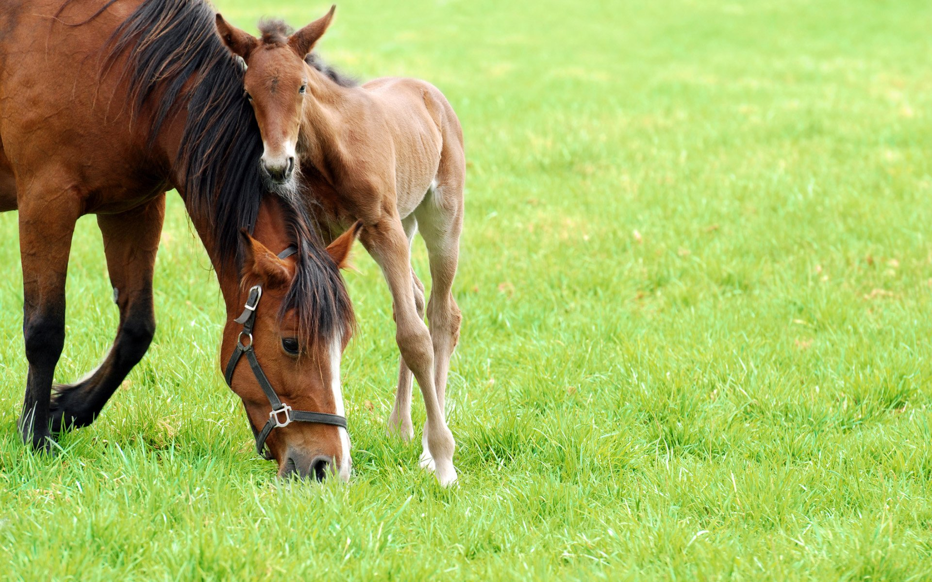 Images of Mother Horse with Foal