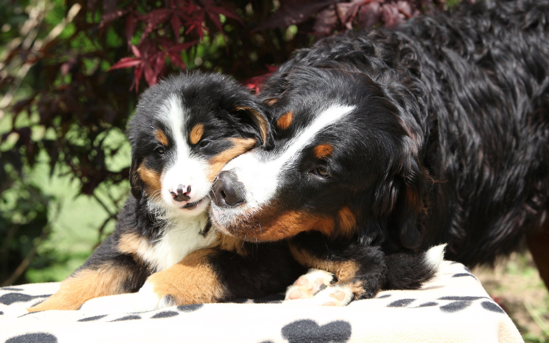 Mum Dog and Cute Puppy Photography