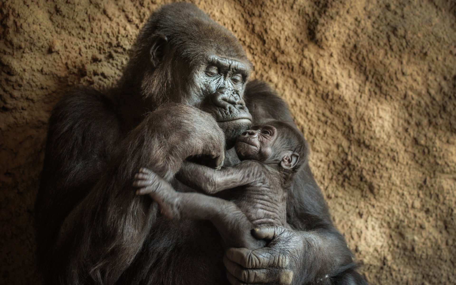 Mum Gorilla with Baby Image