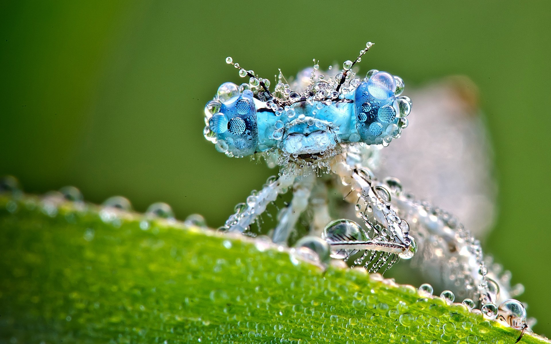 Stunning Dragonfly Water Drop Macro Photography Background HD