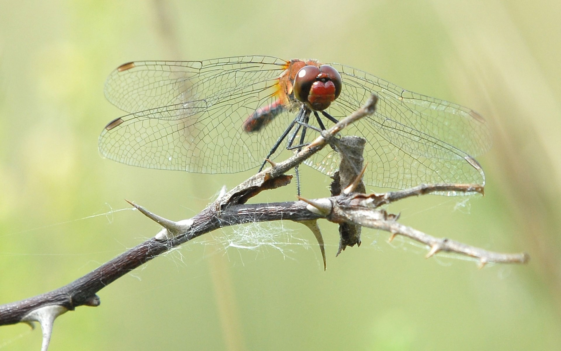 dragonfly photo wallpaper