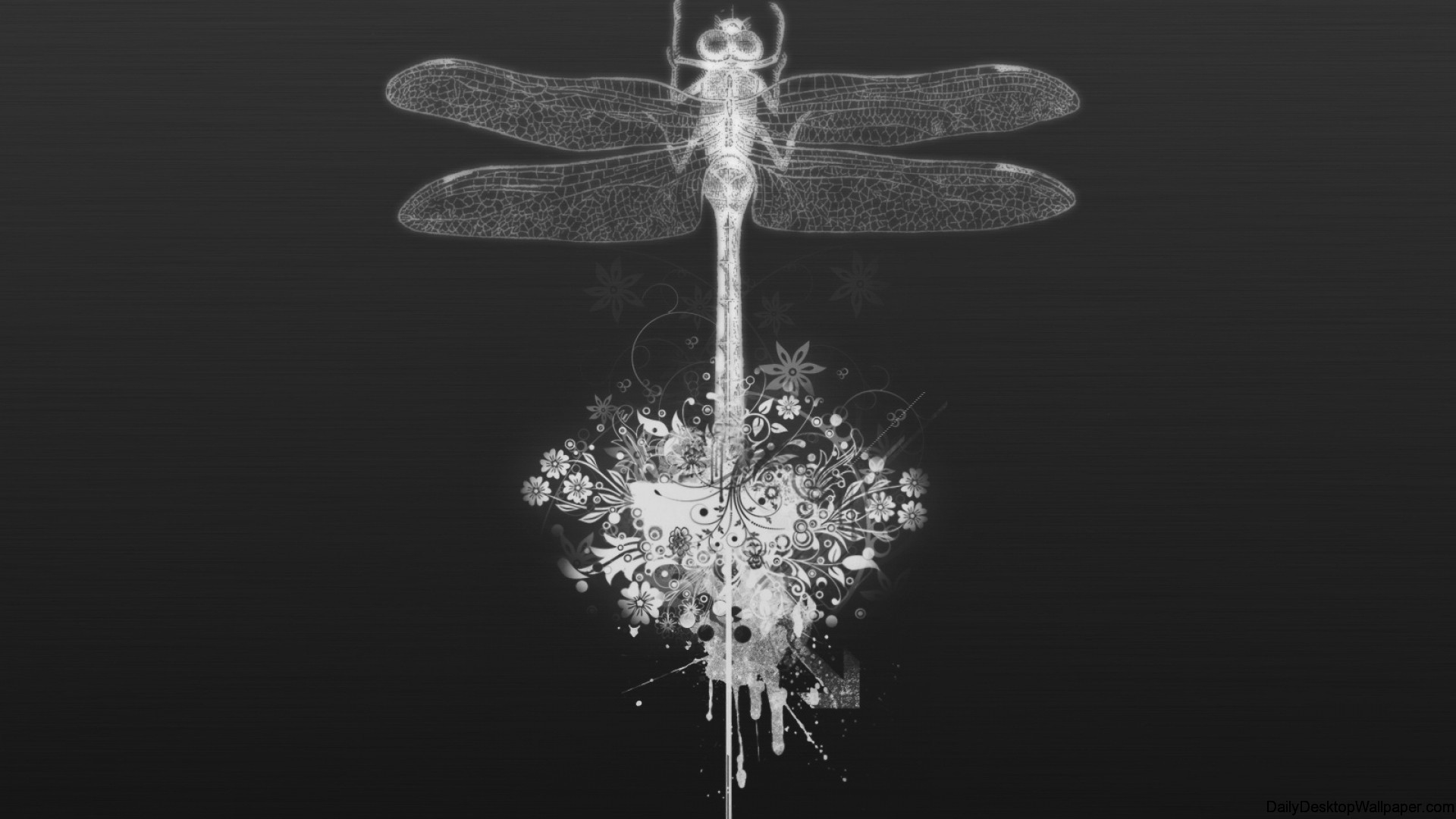 dragonfly wallpaper black and white