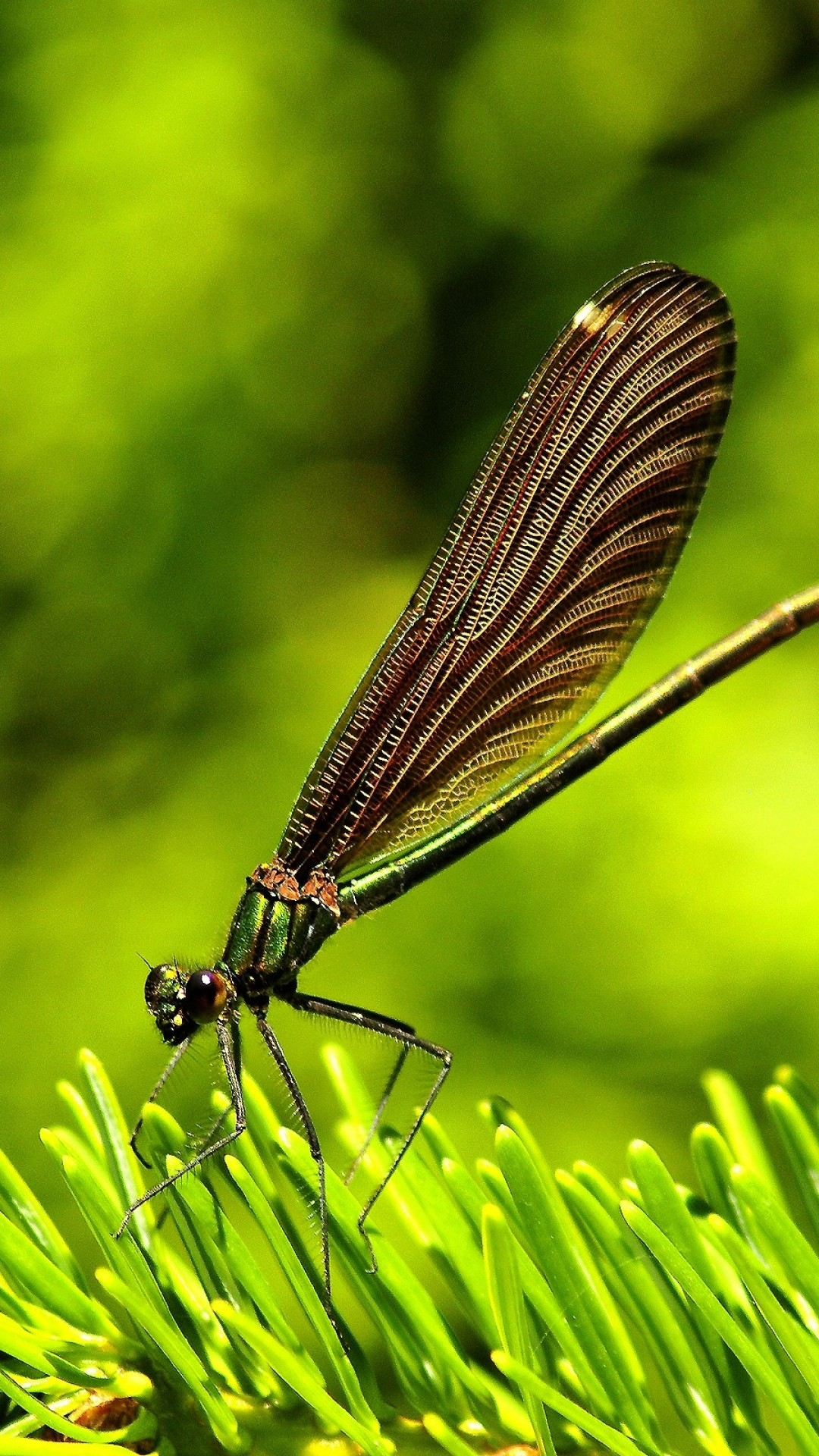 dragonfly wallpaper for phone