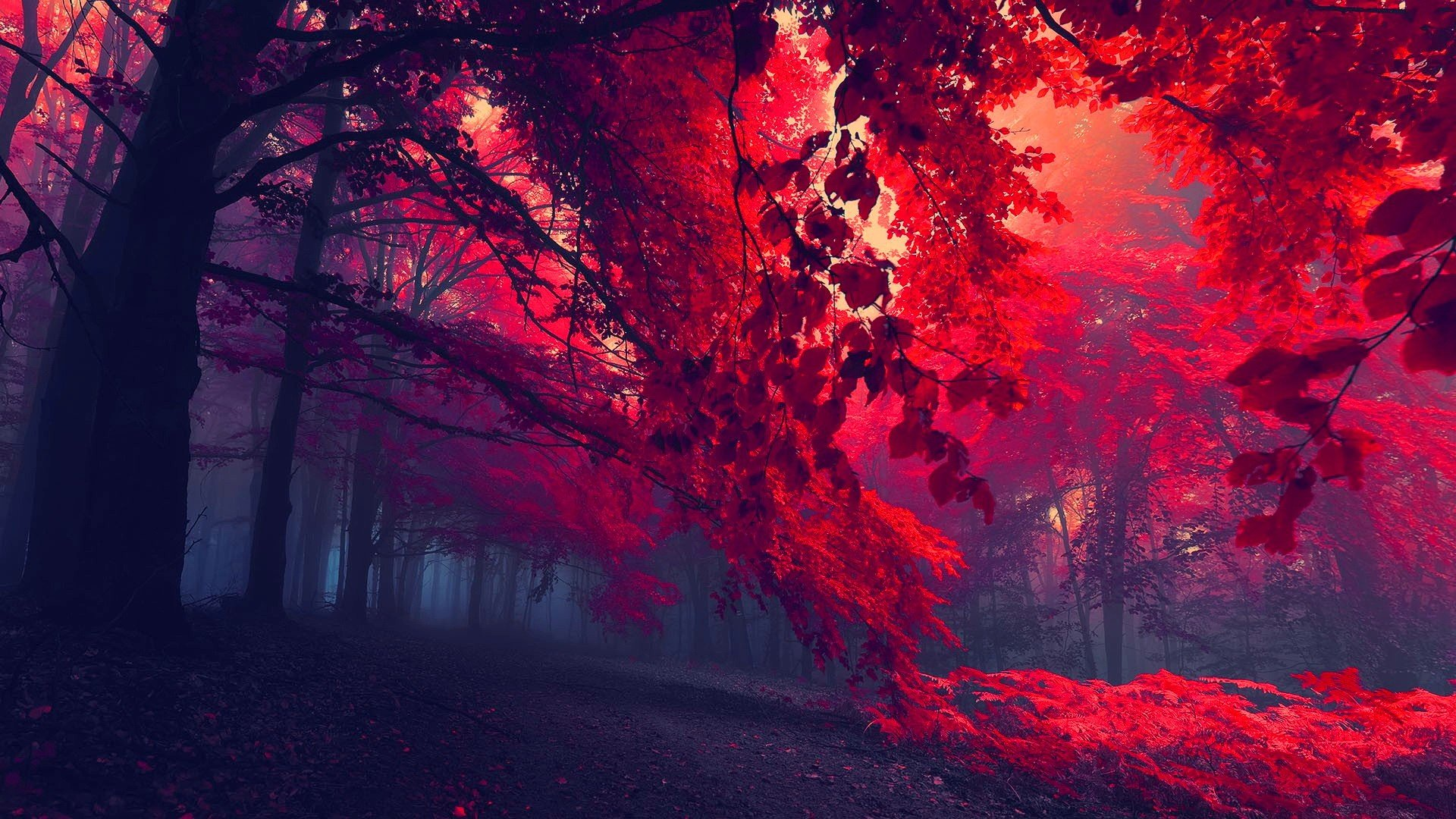 forests nature trees magic fall-autumn leaves red wallpaper