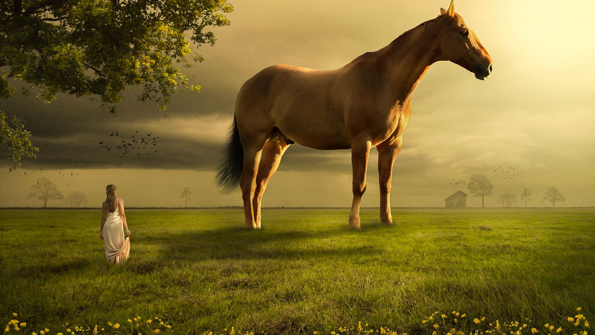 Dream Horse Image Wallpaper