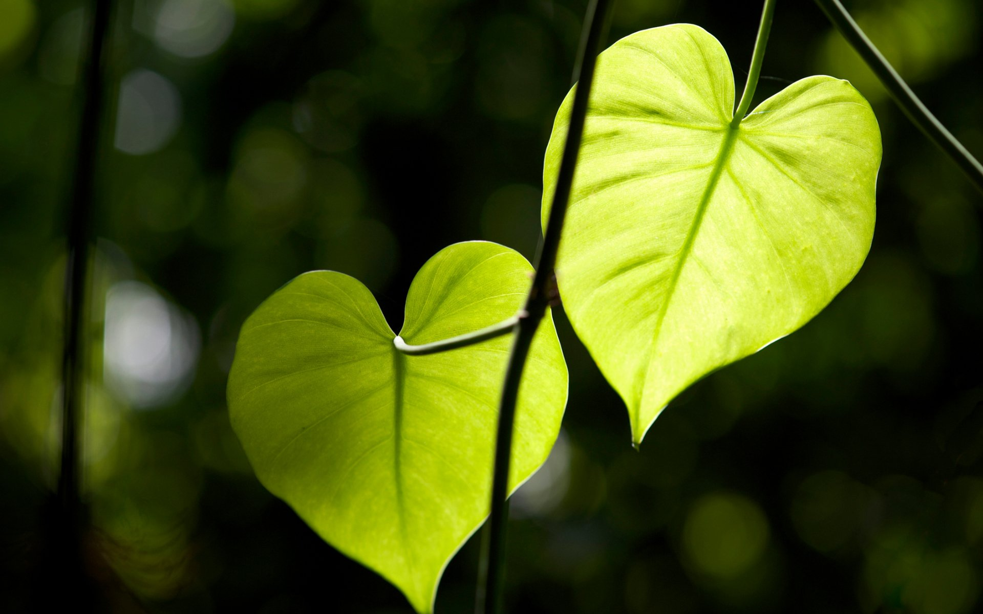 Heart Shaped Natural Images Desktop Wallpapers