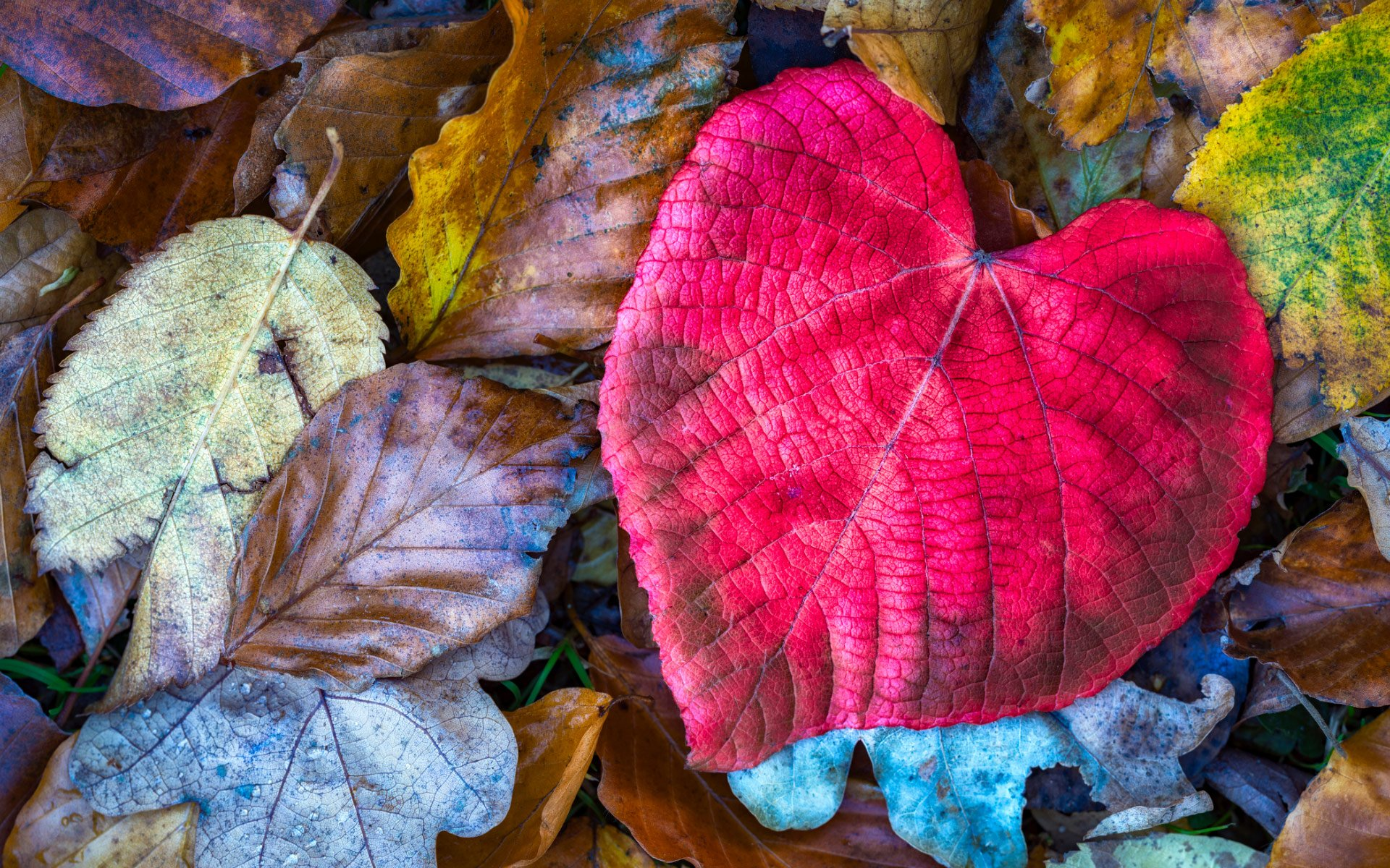 Heart Shaped Nature Desktop Wallpapers