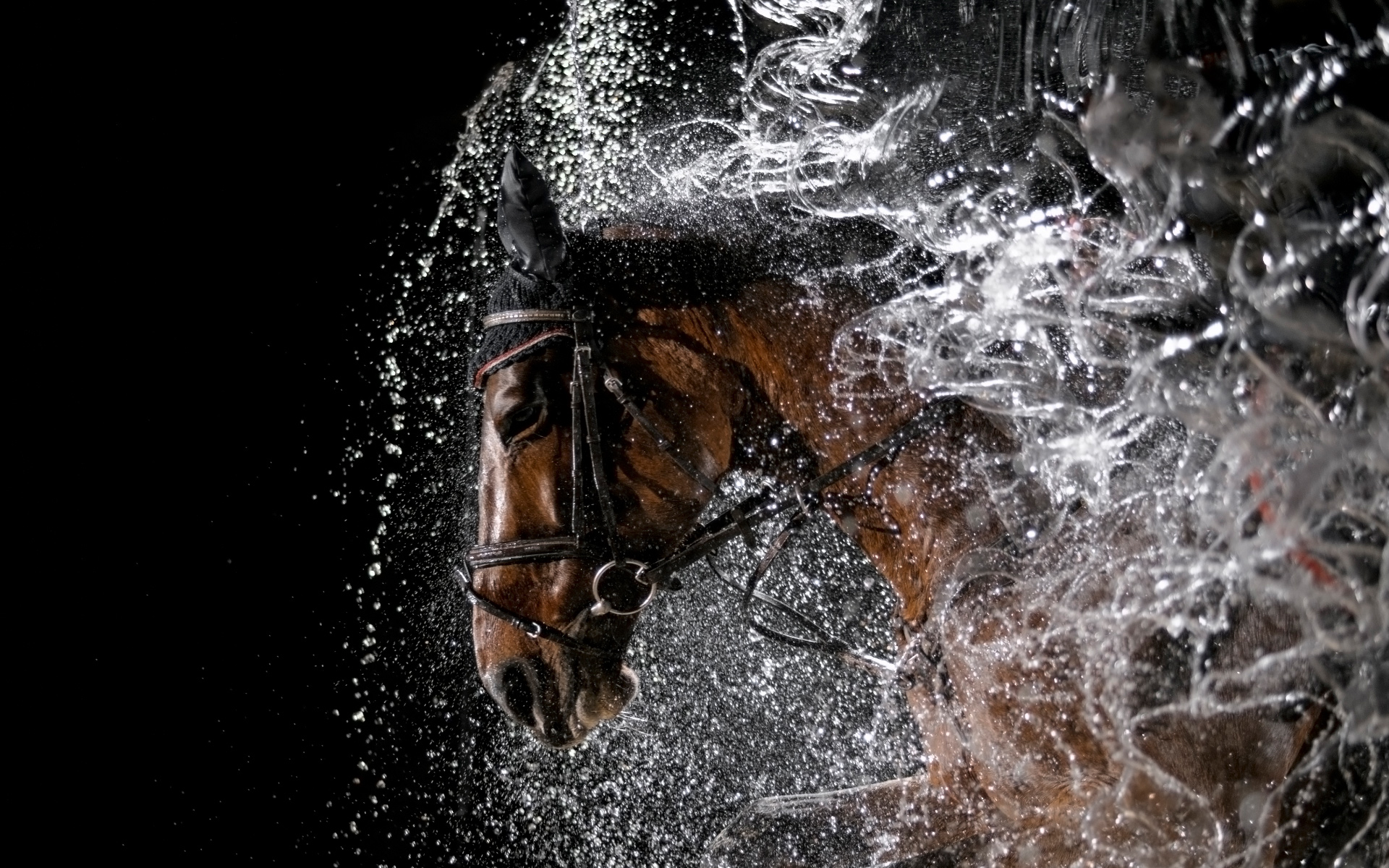 Horse Image Wallpaper 3