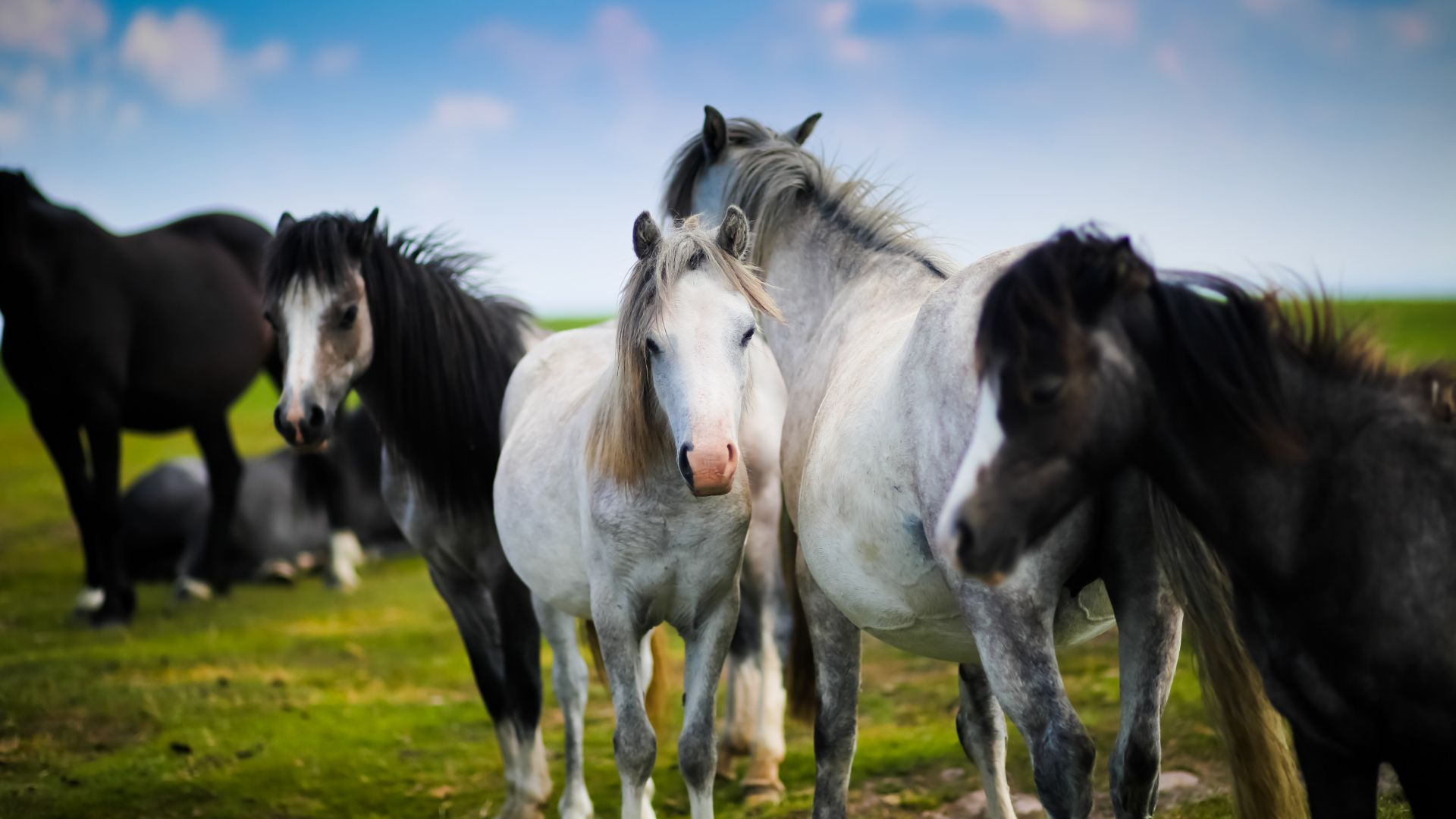 Horses Wallpaper HD
