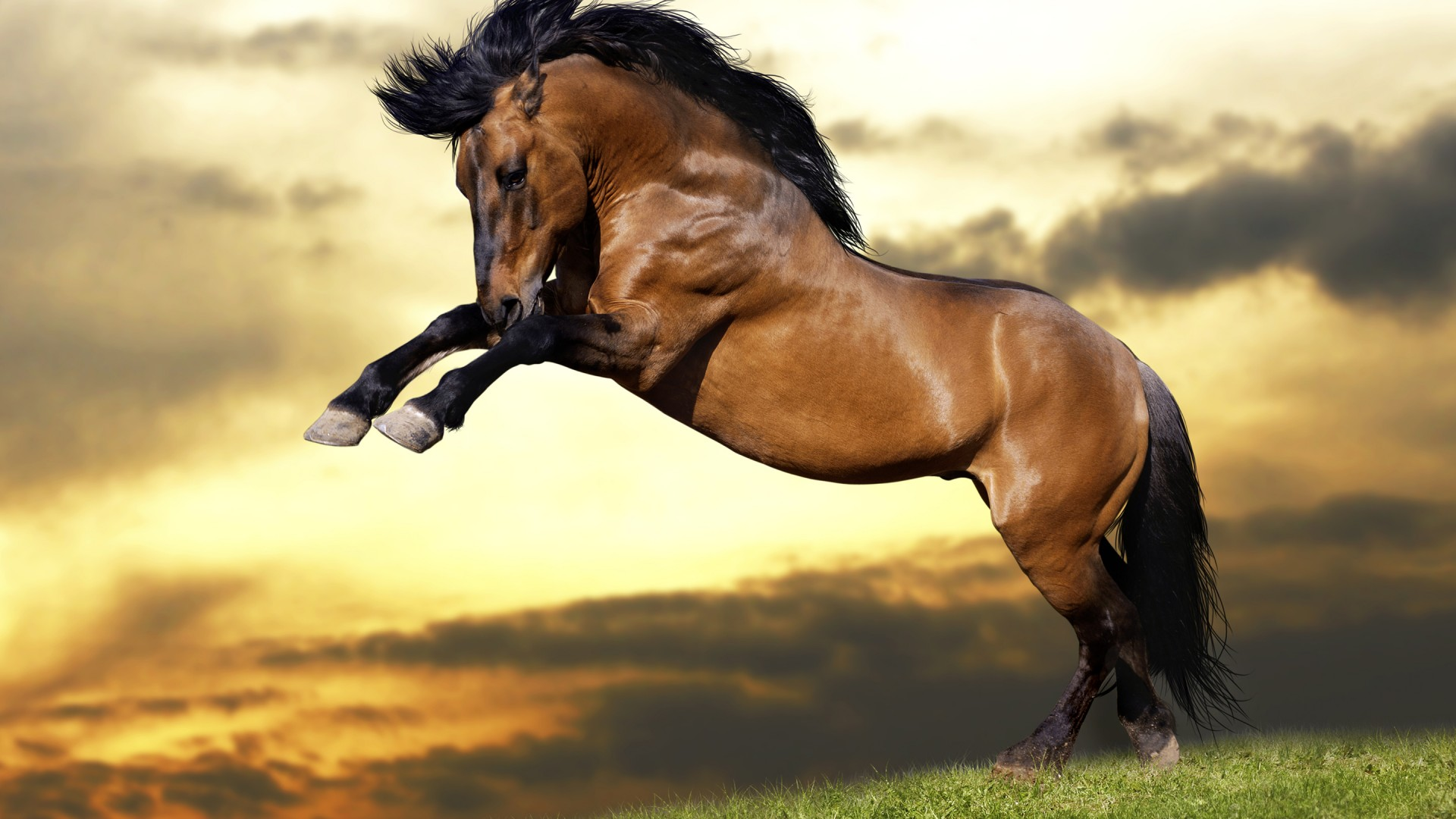 Jumping horse Wallpaper 1080p