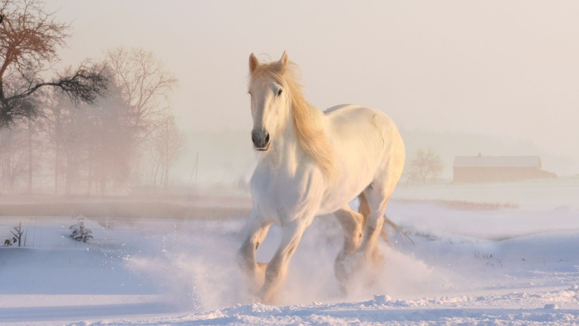 White horse Wallpaper